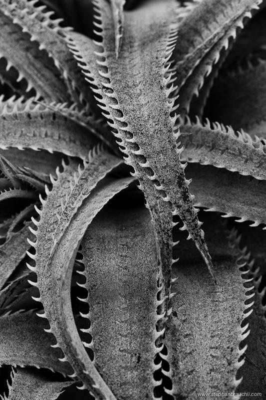 Cactus Highway - cactus close-up photo