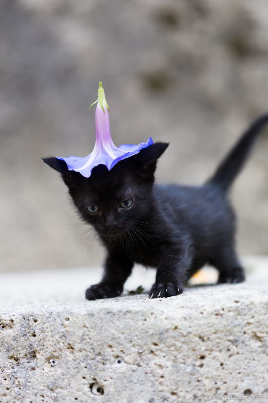 The Wizard Kitten