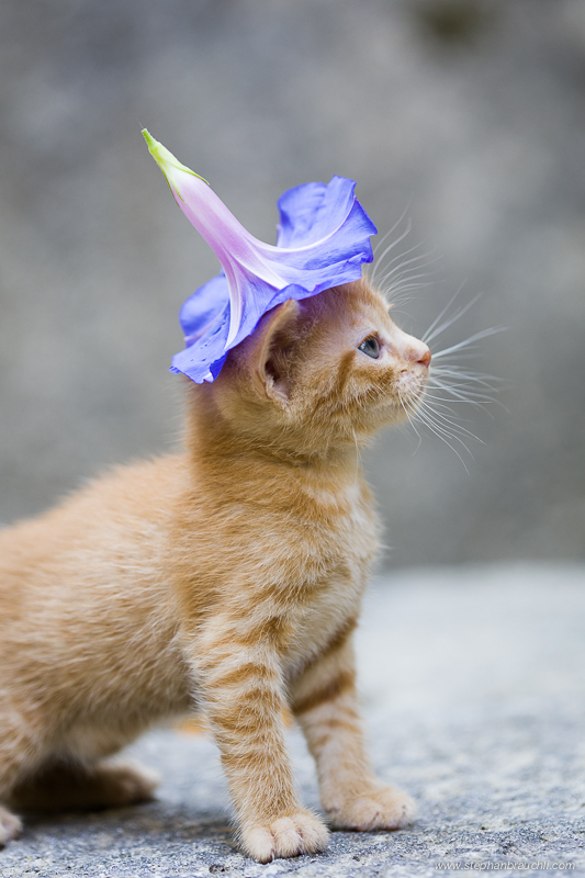 Agent Orange - kitten portrait goes viral