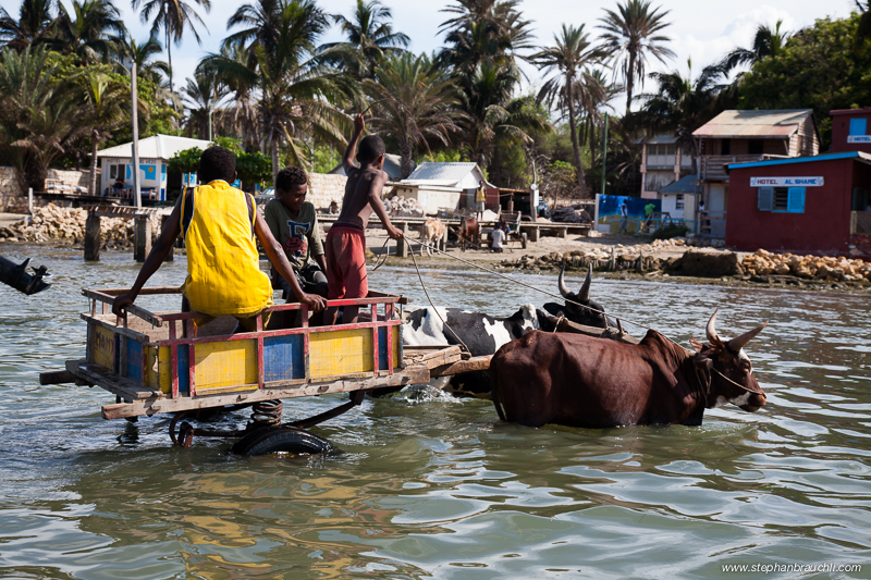Ox-cart that transports passengers to the boat