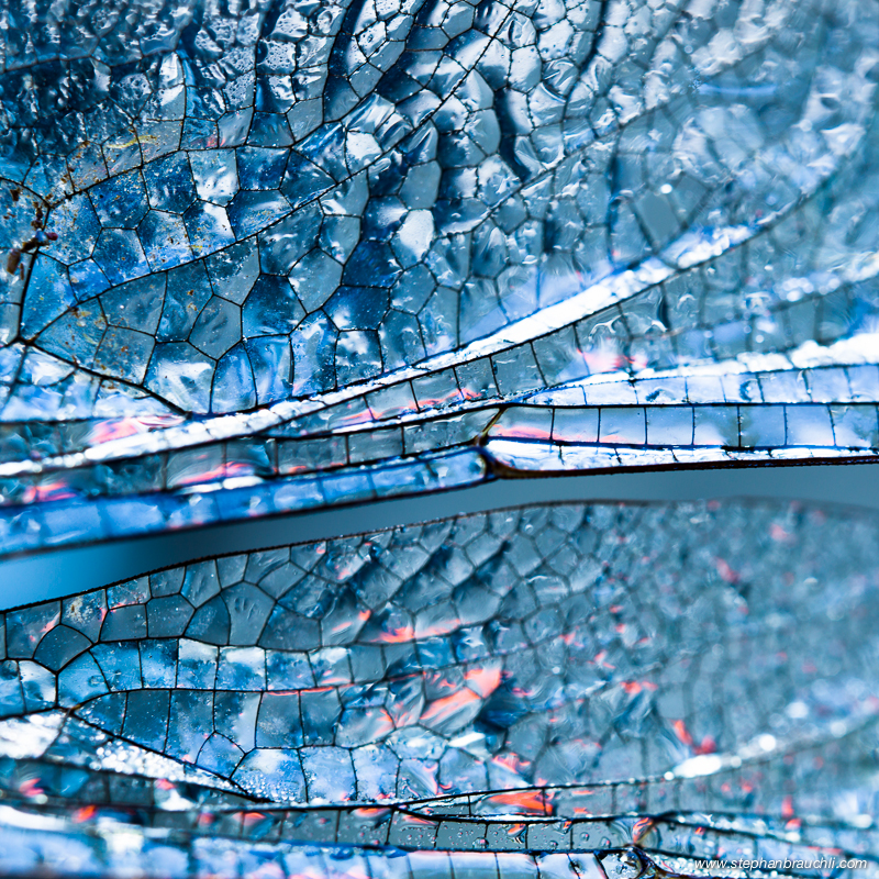 Macro Landscapes - Dragonfly Wing Detail